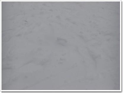 キロロの雪質